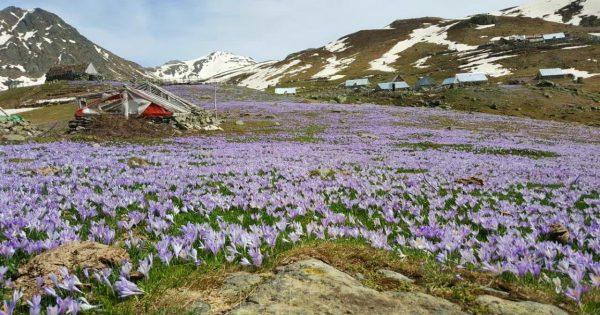 doberdol flora view