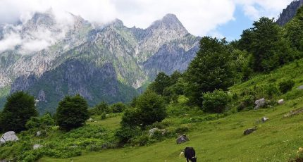 cows grazing albanian alps