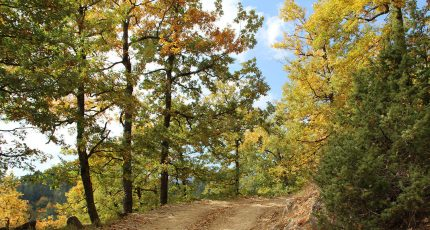 dardhe national park korce autumn
