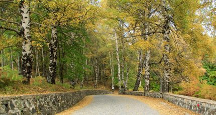 national park dardhe autumn