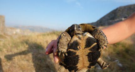 turtle rozafa castle shkoder albania