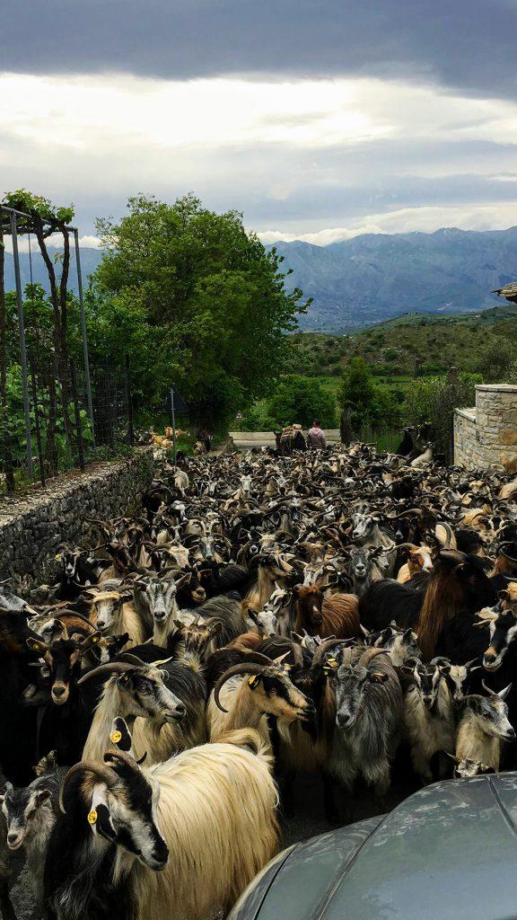 goats rural area remote village albania